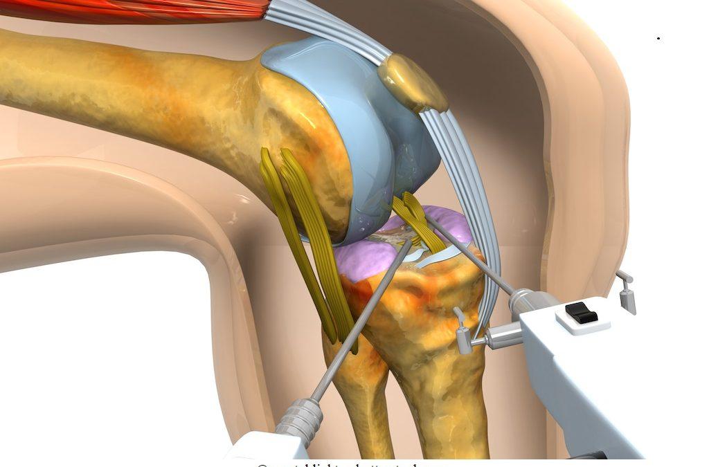 Anatomia del ginocchio