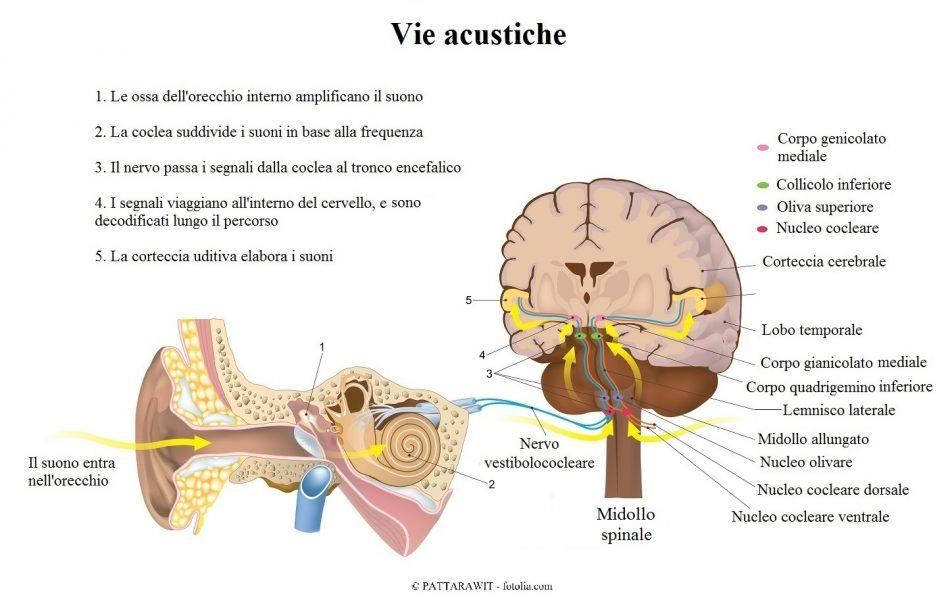 nervo-vestibolococleare