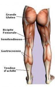 anatomia muscoli, posteirori, coscia, semimembranoso, semitendinoso, polpaccio, achille, gluteo, bicipite femorale, sportivi, palestra, calciatori, atleti, pallavolo, basket, tennis, ciclismo.