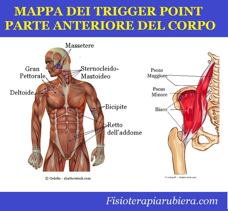 trigger point petto, addome