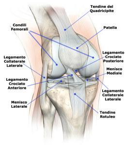 articolazione,ginocchio,sinovite,dolore,male,infiammazione,male,membrana,sinoviale,sinovia