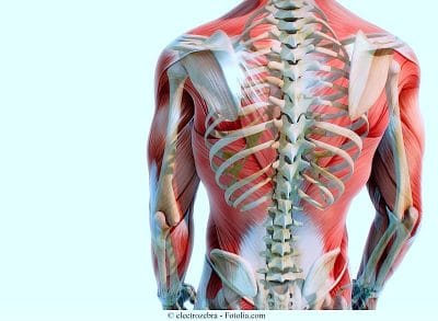 Anatomia,colonna dorsale,vertebre,costole,scapole