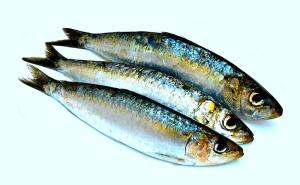Pesce,omega,3,infiammazione,dolore,gonfiore,terapia,cura
