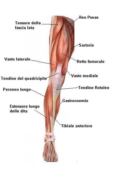 Strappo muscolare lesione