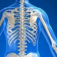 anatomia, corpo, dorsale, CERVICALE, lombare, costale, nervo, dorso, colonna, rachide, scapola, interscapolare, D1, D2, D3, D4, D5, D6, D7, D8, braccio, dorsalgia