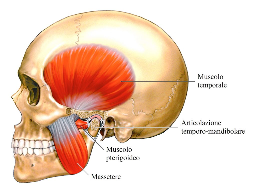 Bruxismo,mandibola,muscoli