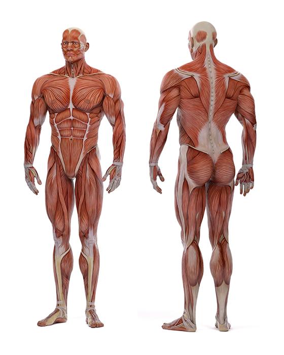 corpo umano 1