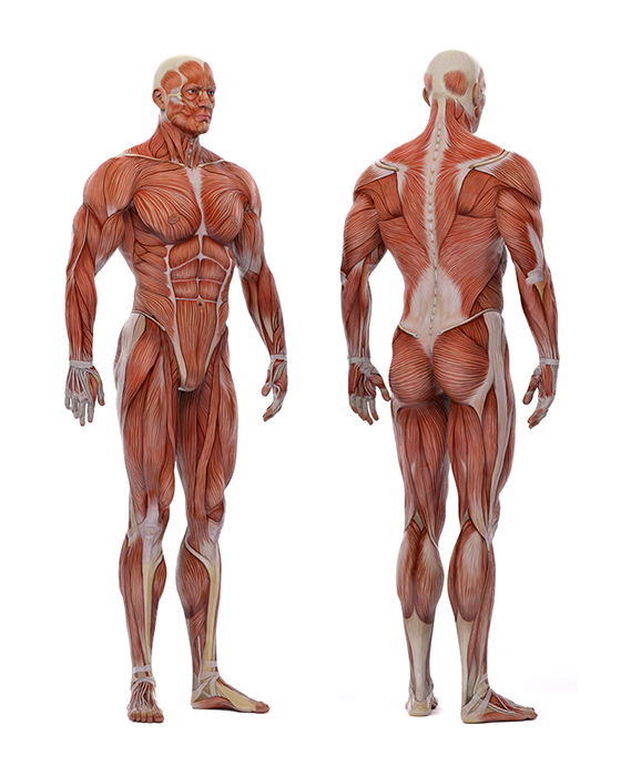 corpo umano 2