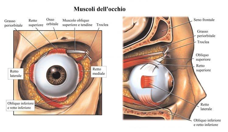 Muscoli dell'occhio,retto,obliquo,paralisi