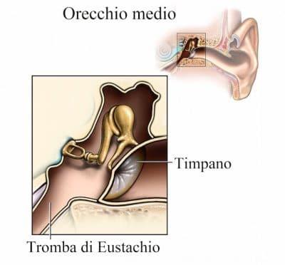 orecchio medio,timpano