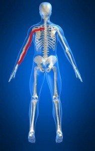 anatomia corpo, braccio, arto superiore, nervo, muscolo, fisioterapia e riabilitazione, dorso, neuropatia, discopatia, ernia del disco, protrusione, bulging, colonna, disco, radice nervosa, cervicale, C5, C6, C7, D1
