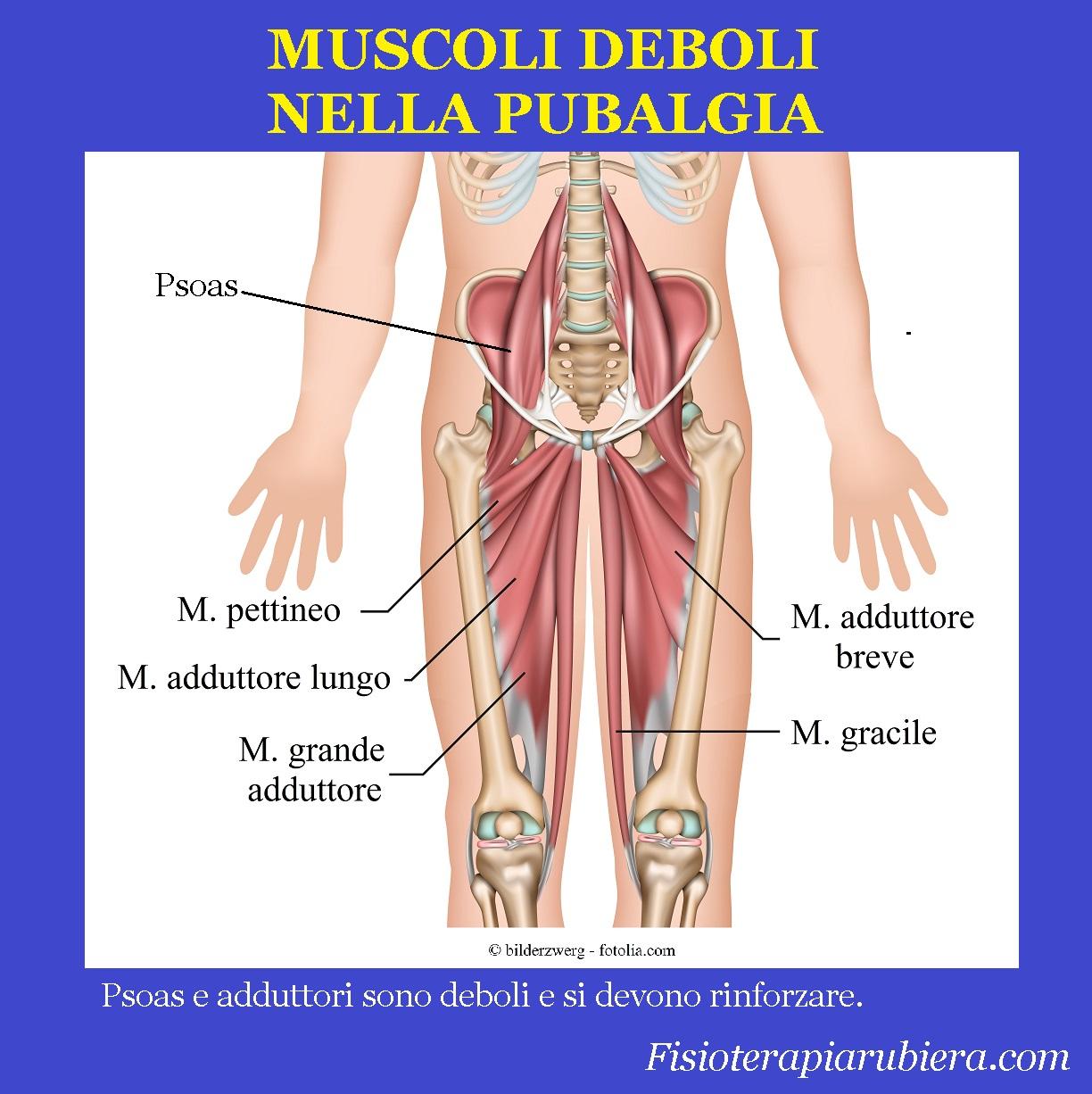adduttore-grande, lungo, breve, psoas, muscoli, pubalgia