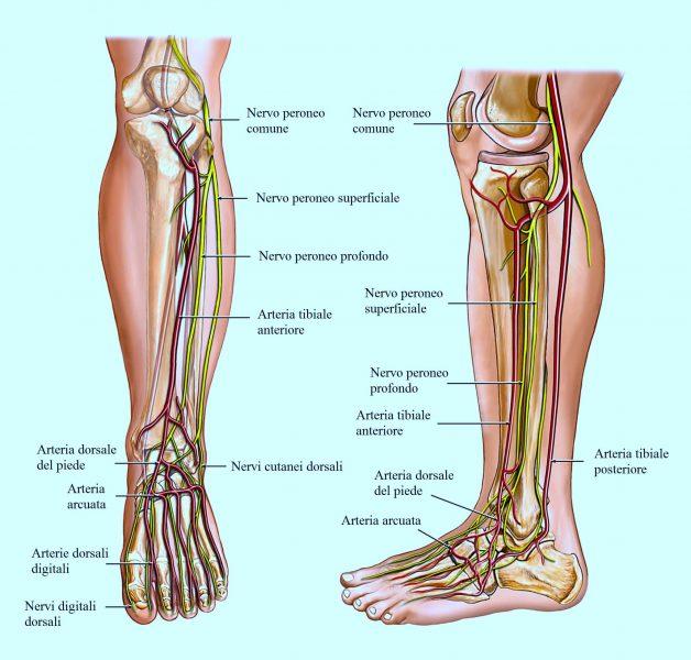 Arterie del piede,formicolio,circolazione