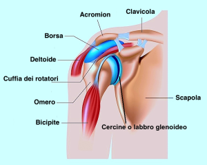 spalla,dolore,lesione,infiammazione