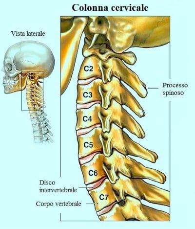 Vertebre del collo,cervicale,nuca