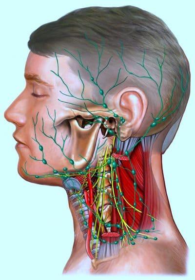 linfonodi del collo,ingrossati,infiammati