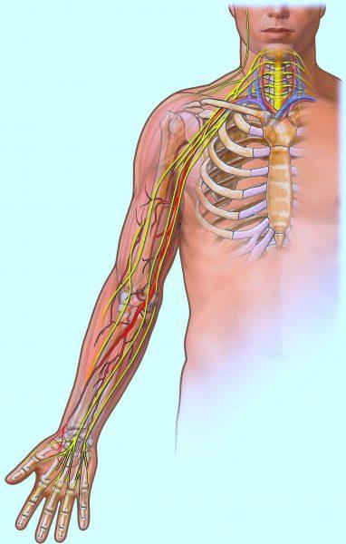 Plesso brachiale,plesso cervicale