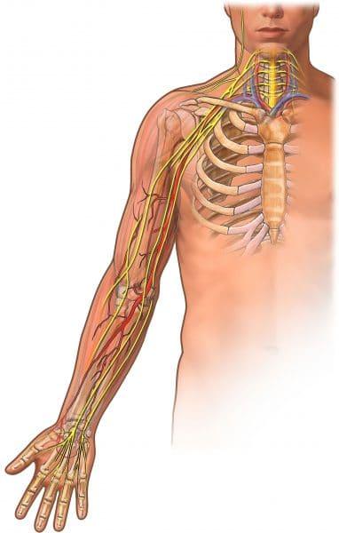 plesso brachiale,nervi,braccio