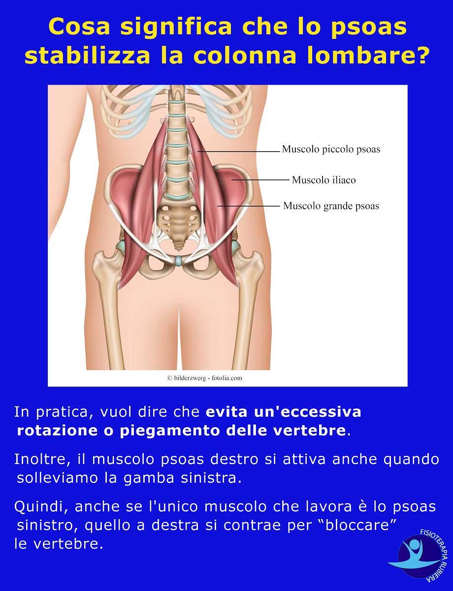 psoas-stabilizza-la-colonna-lombare