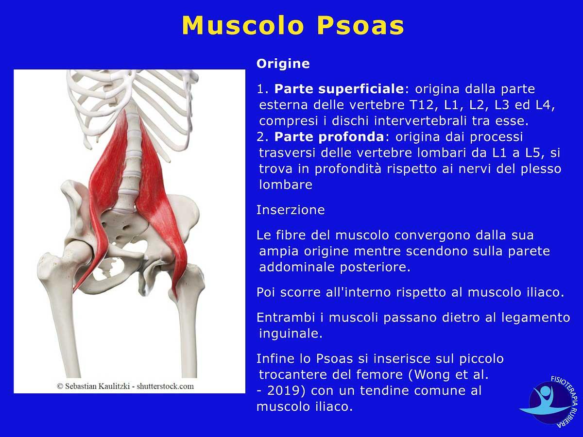 Muscolo-Psoas