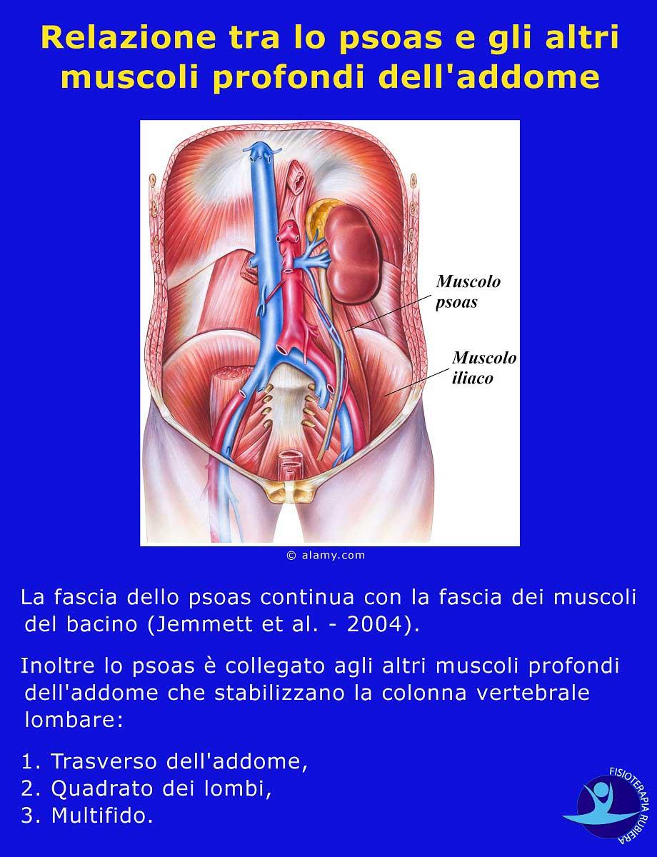 psoas-e-gli-altri-muscoli-profondi-delladdome